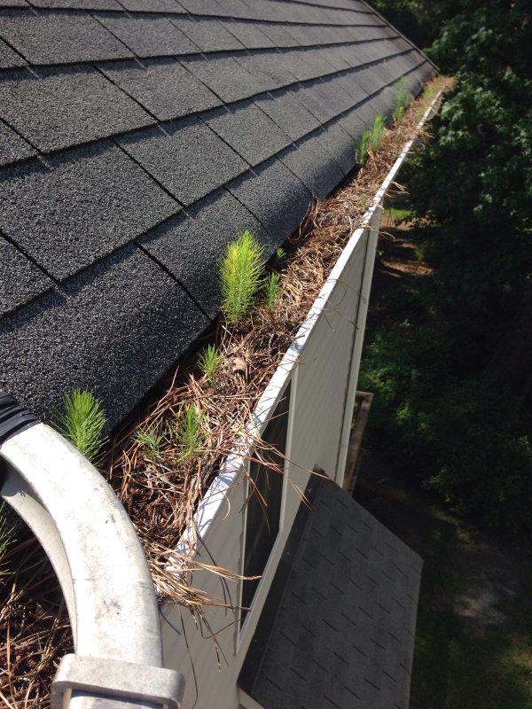 Rain Gutter Cleaners in Saint Louis, MO 63188