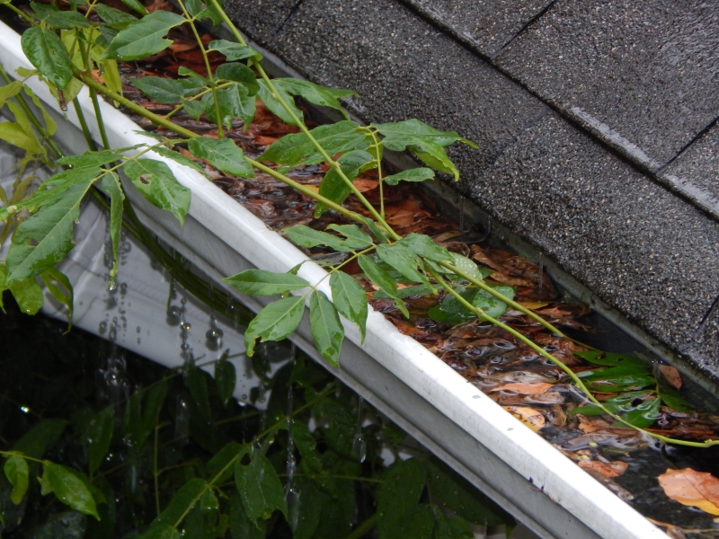 Rain Gutter Cleaners in Montier, MO 65546